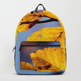 Beech Backpack