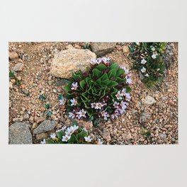 Alpine Spring beauty Colorado Rug