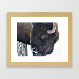 Buffalo Eye Framed Art Print