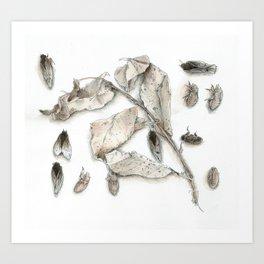 Cicada Display No. 1 Art Print