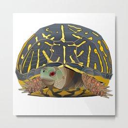 Shy Peeks - Box Turtle Metal Print