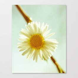 Whoops A Daisy  Canvas Print