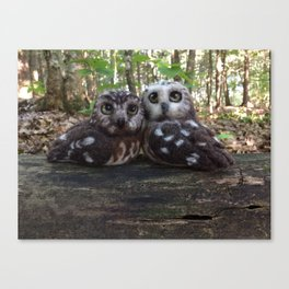 Northern Saw Whet Owls - Needle Felted Sculptures Canvas Print