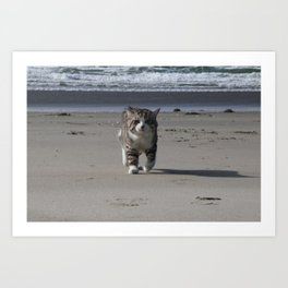 Cat to patrol the beach Art Print
