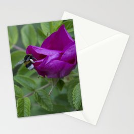 Bumble Bee On Wild Rose Stationery Cards