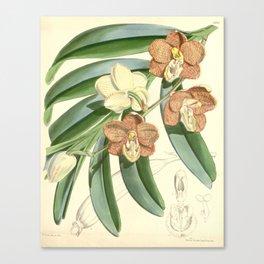 Esmeralda cathcartii Canvas Print