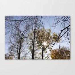 trees in the autumn season Canvas Print