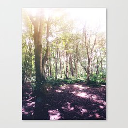 Forest Glare Canvas Print