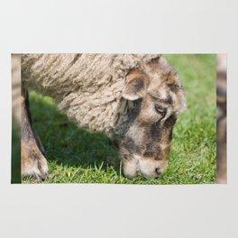 Single adult sheep eating grass Rug