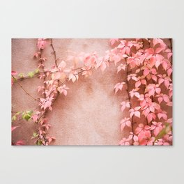 Wall abstract old ivy leaves Canvas Print