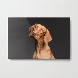 Dog Head Tilt (Pet Portrait) Metal Print