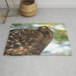 Young Red-Shouldered Hawk in a Desert Willow Rug
