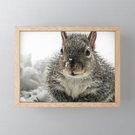 Adorable Praying Squirrel..Feed ME!! Framed Mini Art Print