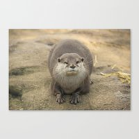 otter Canvas Prints featuring Otter   by Rob Hawkins Photography