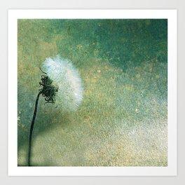 Dandelion at Dusk Art Print