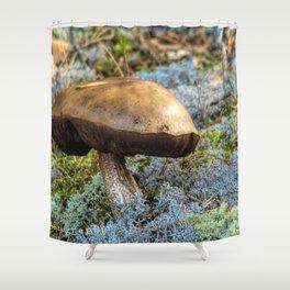 mushroom in swedish forest Shower Curtain