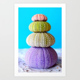 Oursin color coquillage Art Print