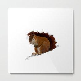 Squirrel art drawing wild life nature forest art print Metal Print