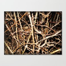 Nested In Thorns Canvas Print