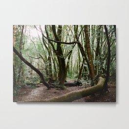 Roy's Redwoods - 35mm film Metal Print