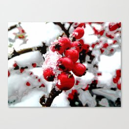 Bright Red Berries Canvas Print