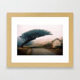 Leaning Cypress tree in Point Reyes National Seashore Framed Art Print