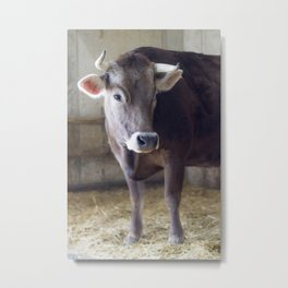 For the love of cows Metal Print