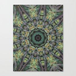 Strawberry Cough Circles Canvas Print
