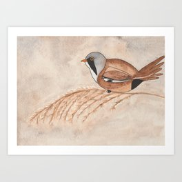 Bearded Reedling Watercolor Art Print