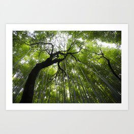 bamboo forest, kyoto japan Art Print