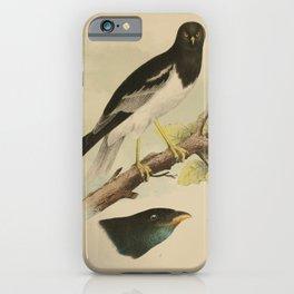 Pied Harrier Dollarbird8 iPhone Case