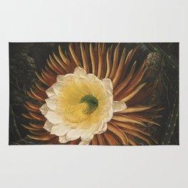 Reinagle, P. (1749-1833) & Pether, A. 1763-1812) - The Temple of Flora 1807 - Cereus Rug