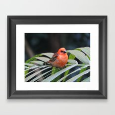 Pretty Little Bird Framed Art Print