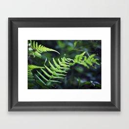 Fern Fantasy Framed Art Print