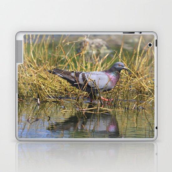 Pigeon At The Pond Laptop & iPad Skin