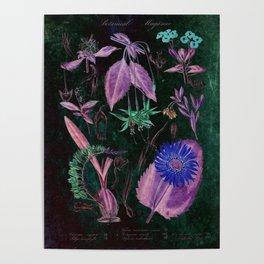 Botanical Study #3, Vintage Botanical Illustration Collage Art Poster