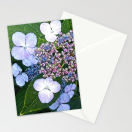 Lacecap Hydrangea Stationery Cards