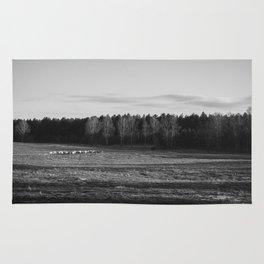 Herd of sheep grazing in evening light. Santon Downham, Norfolk, UK Rug