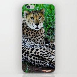 Image  of a Cheetah iPhone Skin