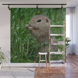 European ground squirrel Wall Mural