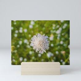 Field scabious Mini Art Print