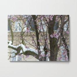 Winter and spring meet I Metal Print