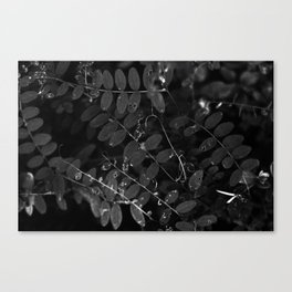 Dark nature Canvas Print