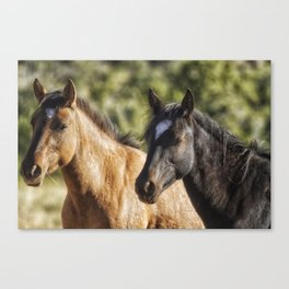 A Filly and a Colt from Garcia's band - Pryor Mustangs Canvas Print