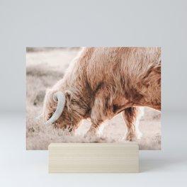 Scottish Highlander Photo | Animal Photography | Blond Scottish Highlander  Mini Art Print