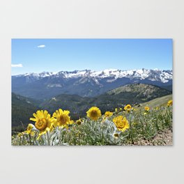 It's Not A Dream Canvas Print