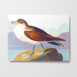 Wandering Shearwater Bird Metal Print