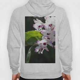 Orchid pattern Hoody