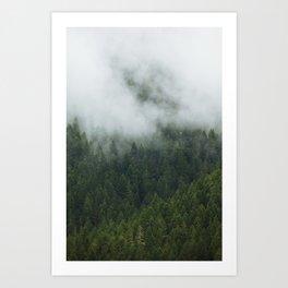 Tree Fog Art Print