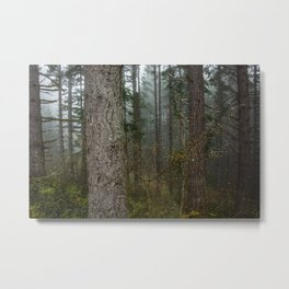 Pacfic Northwest Mountain Forest - 106/365 Landscape Photography Metal Print
